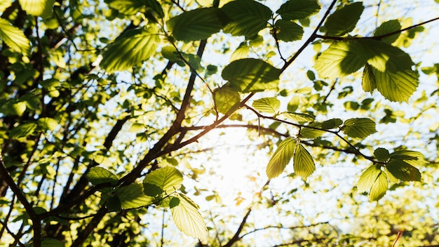 Zielone liście na drzewie