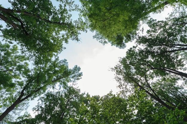 Zielone liście na niebie w środku serca