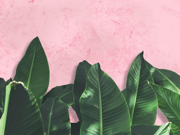 Zielone liście na różową betonową ścianę grunge