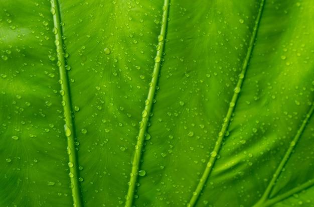 Zielone liście na ścianie w tle