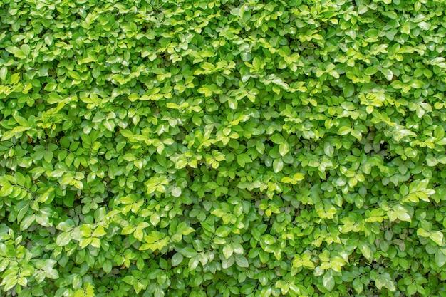 Zielone liście na ścianie