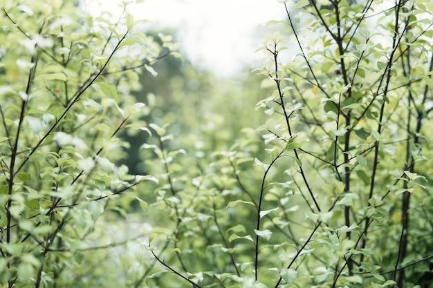 Zielone liście na tło zamazane pole