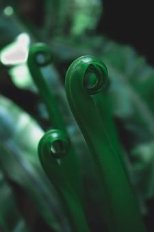 Zielone liście na zieleni