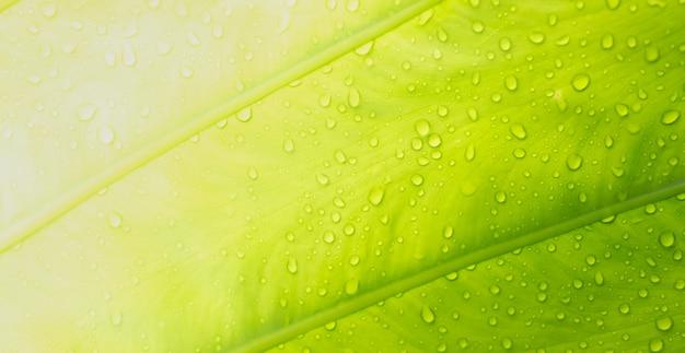 Zielone liście naturalne tło tapety, tekstura liścia, liście z miejscem na tekst