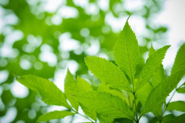 Zielone liście naturalne tło, tekstura liści