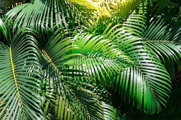 Zielone liście palmowe w ogrodzie