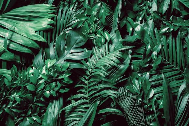 Zielone liście palmy lub kokosa w ciemnych odcieniach tła lub zielone, liściaste wzory lasów tropikalnych sosny