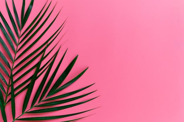 Zielone liście palmy na jasnym różowym pastelowym tle, tropikalne zielone liście palmowe, minimalna koncepcja widok z góry. leżał płasko. puste miejsce na kopię.