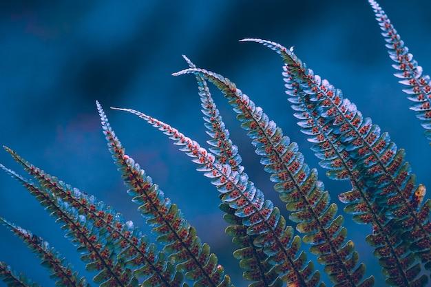 Zielone liście paproci z rozmytym niebieskim tłem
