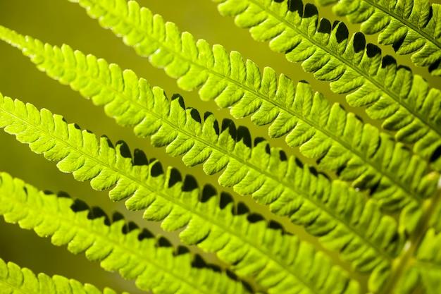 Zielone liście paproci