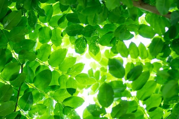 Zielone liście, piękna przyroda rośnie.