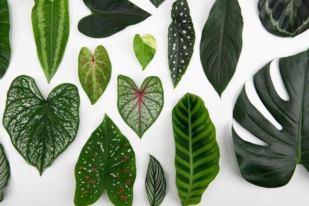Zielone liście płasko leżały w tle
