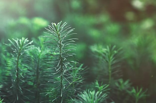 Zielone liście puszystej trawy w ciemnozielonym kolorze