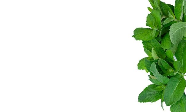 Zielone liście ramki mięty miejsce na kopię