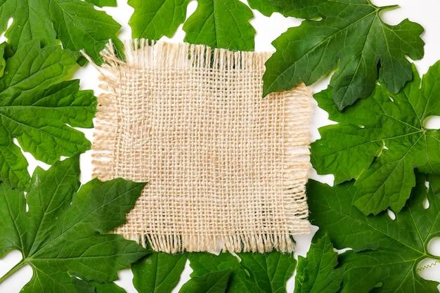 Zielone liście ramki streszczenie tło
