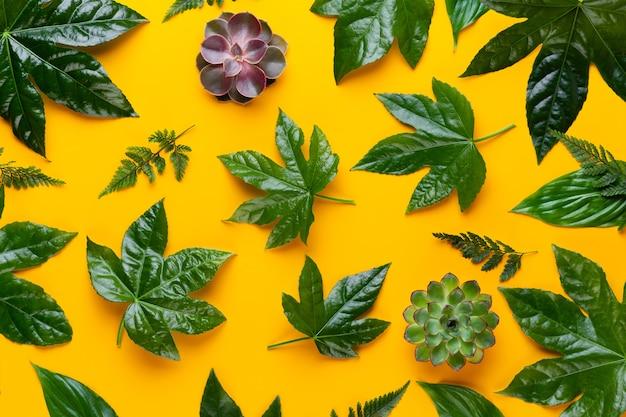 Zielone liście roślin na żółtym tle.