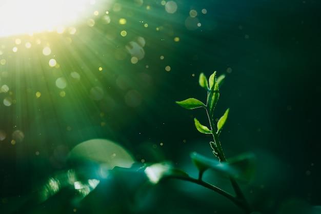 Zielone liście rośliny tropikalne i światło słoneczne z tłem bokeh