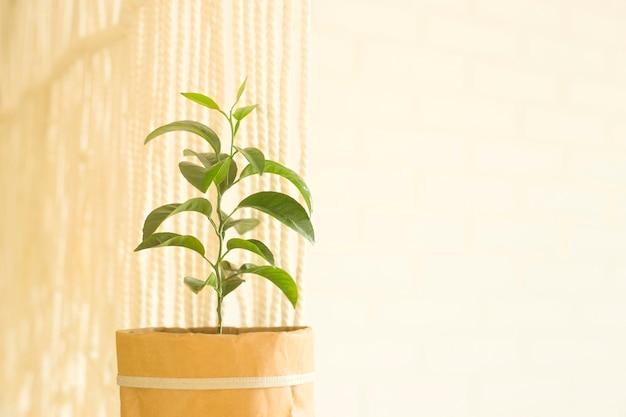 Zielone liście rośliny w doniczce z papieru w białym wnętrzu obok makramy.