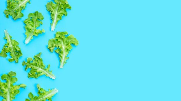 Zielone liście sałaty dębowej na niebieskim tle. widok z góry