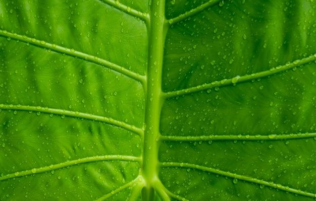 Zielone liście ściany tło, liść ściany natura tło