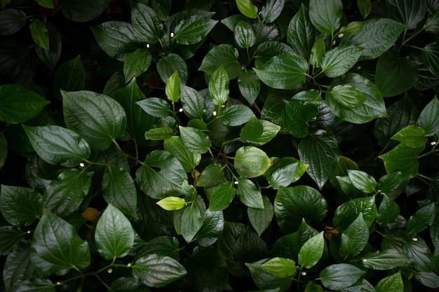 Zielone liście tekstura tło widoku z góry