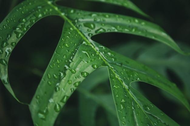 Zielone liście tekstury tła z kroplami wody deszczowej