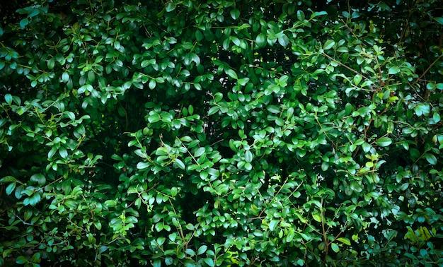 Zielone liście tekstury tła