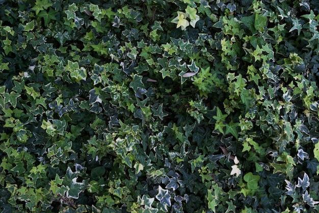 Zielone liście. tle przyrody. tropikalne liście, natura.