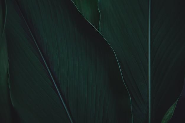 Zielone liście tło. leżał płasko. tło ciemnozielone tło