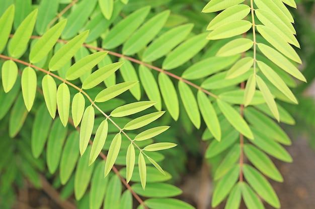 Zielone liście tło na drzewie. selektywne skupienie