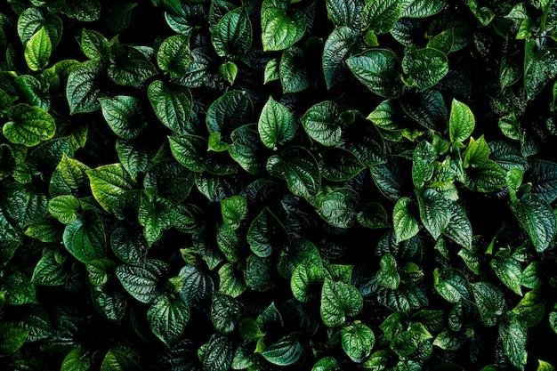 Zielone liście tło. odcień zieleni zielonych liści rano.