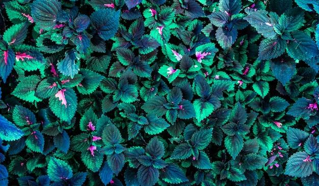 Zielone liście tło projekt. płaskie lay. widok z góry liści. koncepcje przyrody