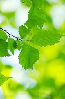 Zielone liście tło w słoneczny dzień