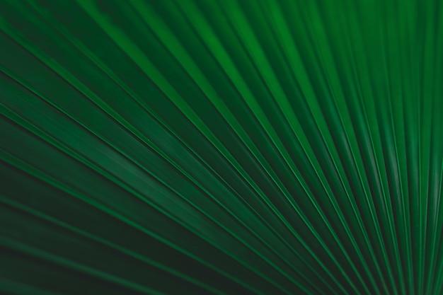 Zielone liście tło wzór