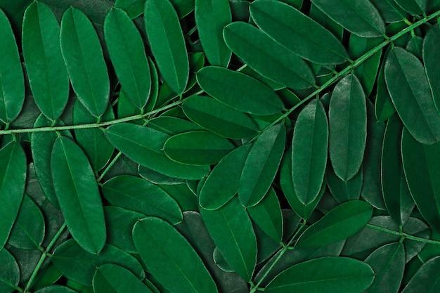 Zielone liście tło z ciemnozielonymi liśćmi