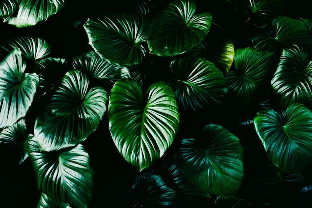 Zielone liście tło.