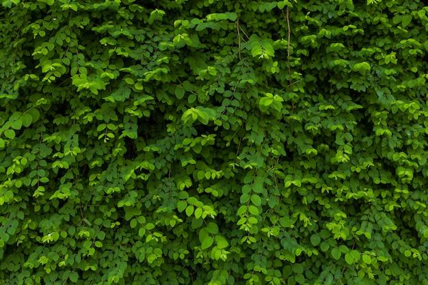 Zielone liście tło
