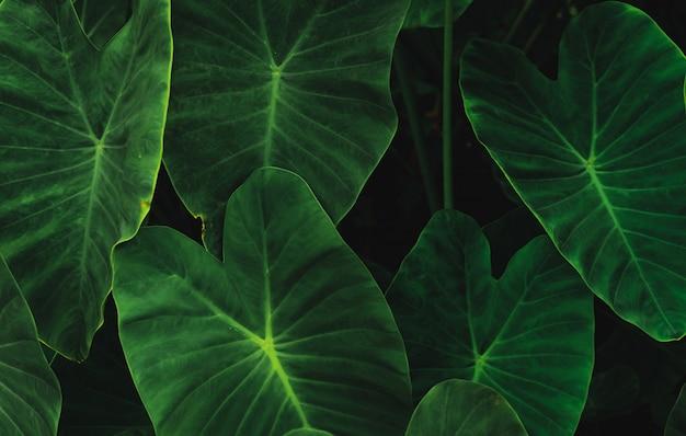 Zielone liście w dżungli