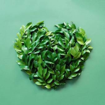 Zielone liście w kształcie serca na jasnozielonym tle na pastelowym zielonym tle