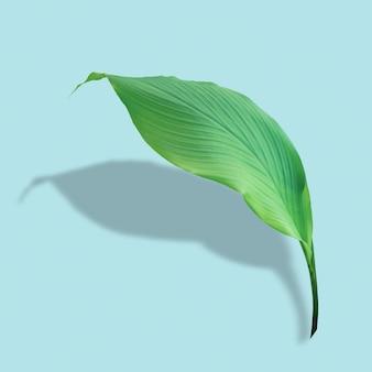 Zielone liście w tropikalnym lesie na niebieskim tle z cieniem