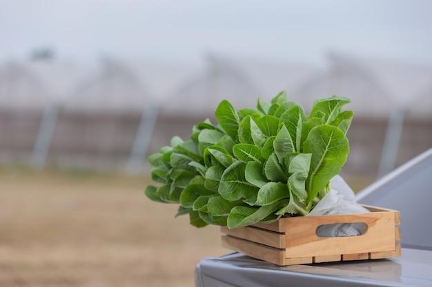 Zielone liście warzywa w drewnianym pudełku