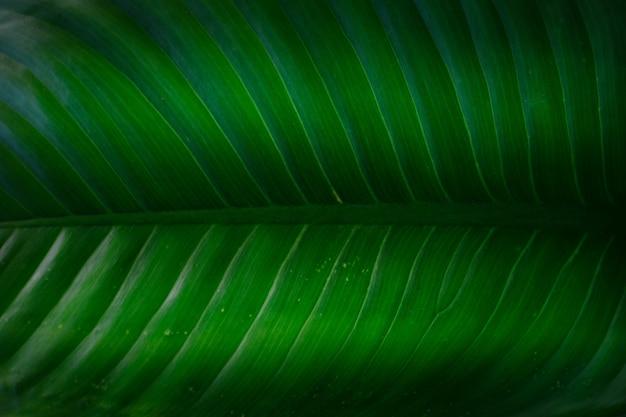 Zielone liście wzór tła