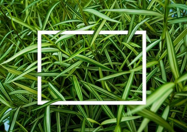 Zielone liście z białym układem bloga, koncepcja natury