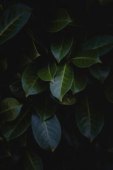 Zielone liście z bliska