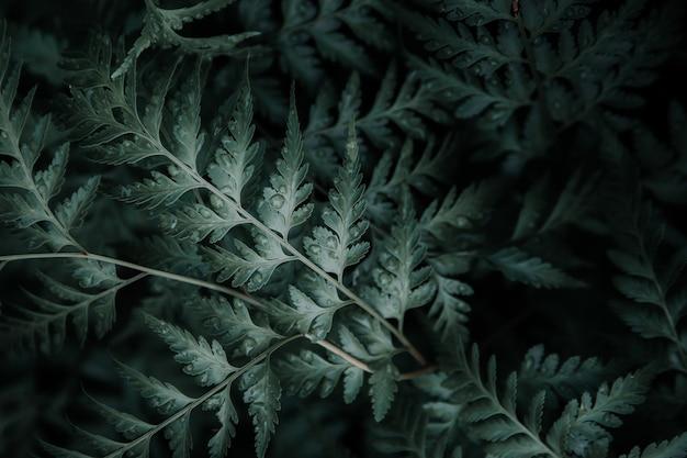 Zielone liście z kroplami wody na wierzchu.
