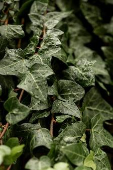 Zielone liście z kroplami wody