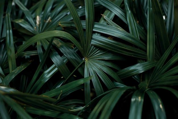 Zielone liście z tłem.