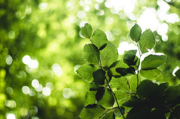 Zielone liście ze światłem i bokeh