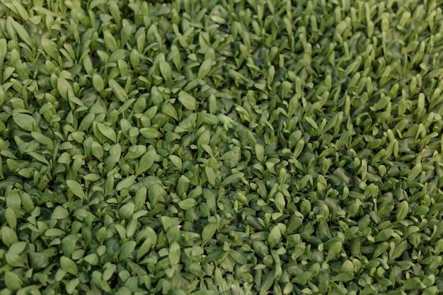 Zielone liście zielone tło