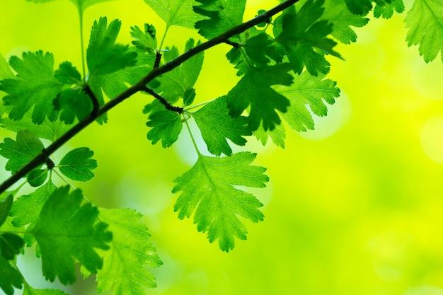 Zielone liście zwisające z drzewa